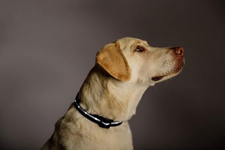 Hundehalsbåndet er genopladeligt og fås i 4 størrelser8
