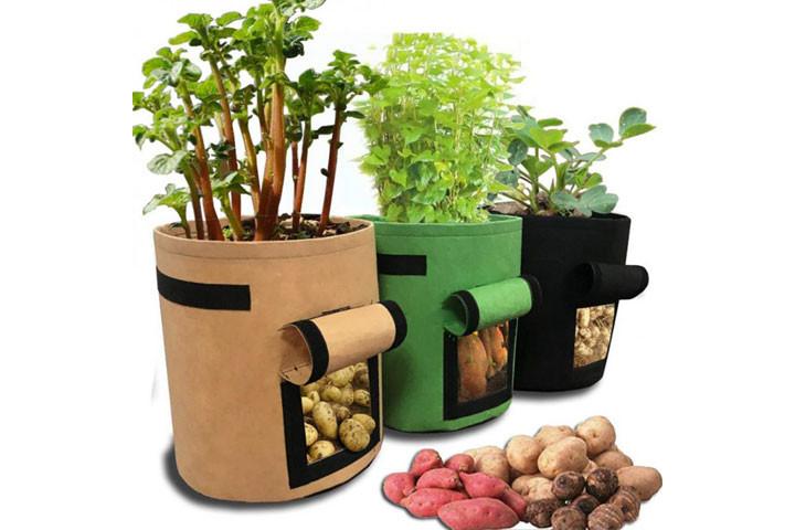 Dyrk rodfrugter på din altan eller i din have med disse 3