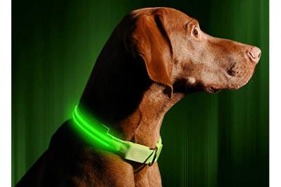 Hundehalsbånd med genopladeligt lys